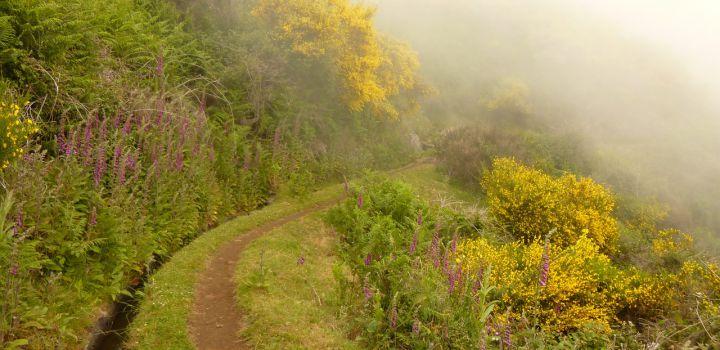 Het klimaat van Madeira
