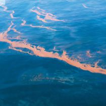 Olie bereikt Florida