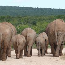 Reizen door zuidelijk Afrika