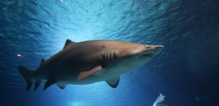 Aanvallen haai Egypte mogelijk door hersenbeschadiging