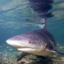 Fauna Australië verandert door overstromingen