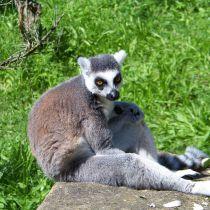 Waarschuwing voor reizen naar Madagaskar