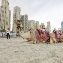 Vorig jaar weer een recordjaar voor Dubai