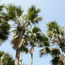 Toerisme Gambia komt weer op gang