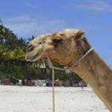 TUI gaat met Dreamliner naar Kenia en Zanzibar vliegen