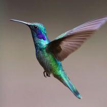 TravelBird voorlopig uitgevlogen