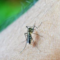 Meer Nederlandse toeristen slachtoffer van dengue