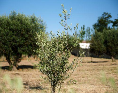 Isropa gaat verder onder de naam &Olives Travel